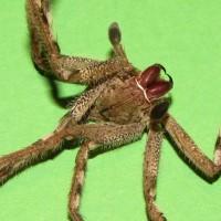 Spider skeleton II