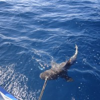 Sharks getting a raw deal - on the dark side of Mozambique