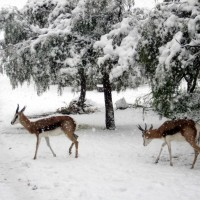 Karoo Winter Wonderland