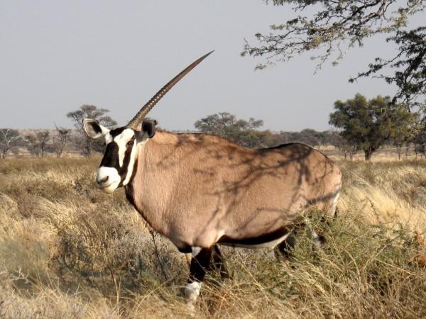 ©Theo van Zyl/notesfromafrica.wordpress.com