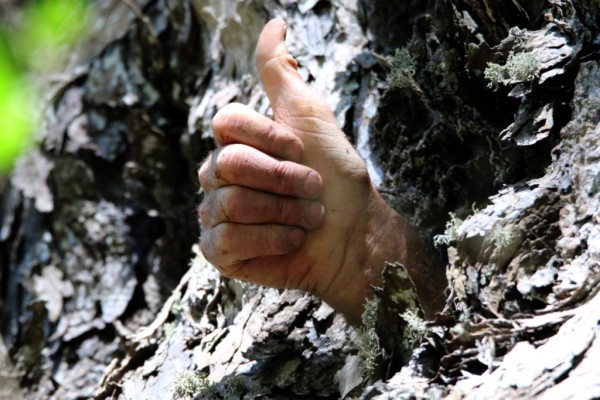 A hand sticking out of a tree. Photoshopped or not? ©WMB/notesfromafrica.wordpress.com