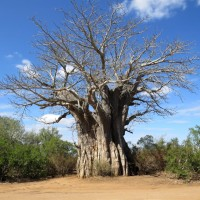 Things we loved about Kruger