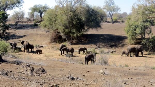 Big elephant family group. ©WMB/notesfromafrica.wordpress.com