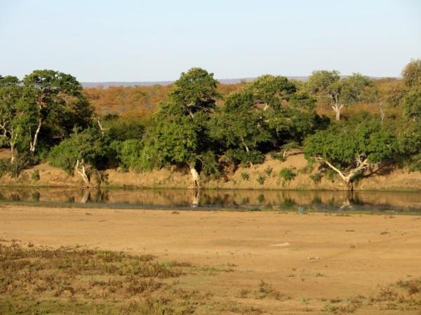 Beautiful trees lining a river. ©WMB/notesfromafrica.wordpress.com