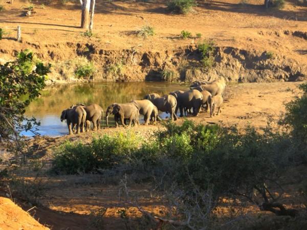 More elephants. ©WMB/notesfromafrica.wordpress.com