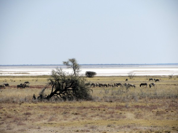 ©LB/notesfromafrica.wordpress.com