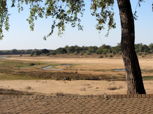 Letaba camp: another view towards the Letaba River from the camp restaurant. ©LB/notesfromafrica.wordpress.com